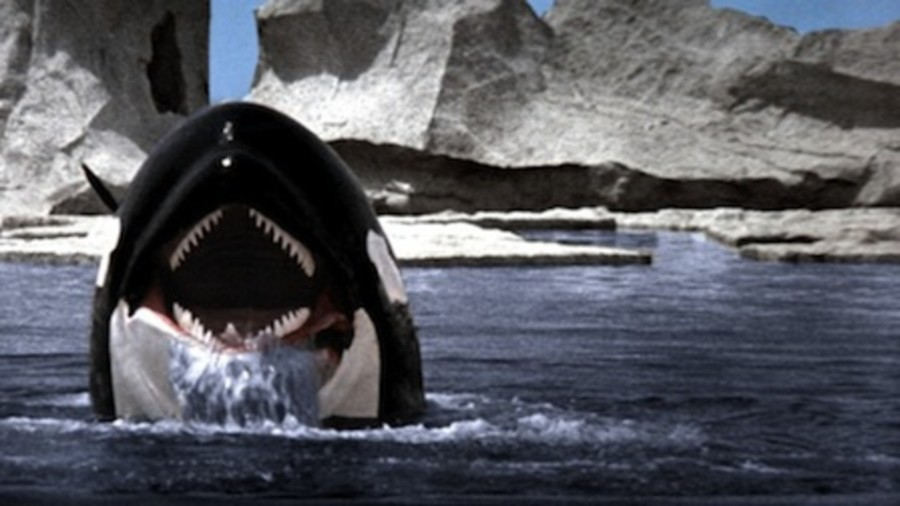 ORCA vs. JAWS: A Fight 41 Years in the Making
