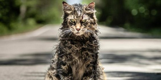 Cat-from-the-Pet-Sematary-2019-remake