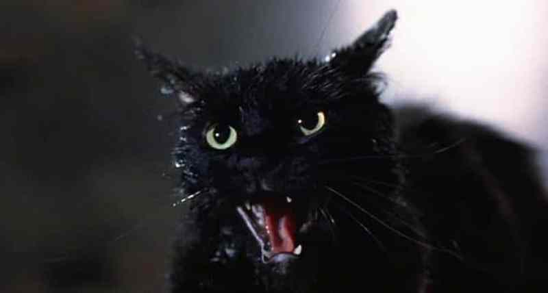 tales from the darkside cat