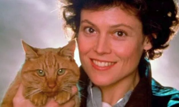 Purrrfectly Terrifying: Counting Down Horror's 10 Best Kitties