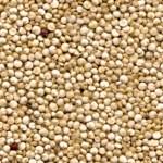 grana di quinoa