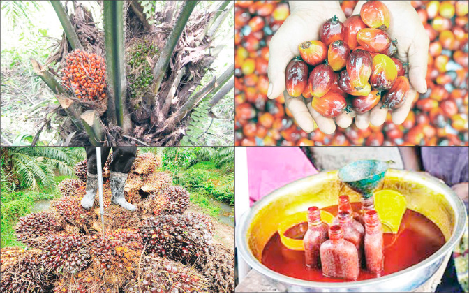 Comparing Nigeria's palm oil production with Malaysia, Indonesia, Thailand not fair – NIFOR ED