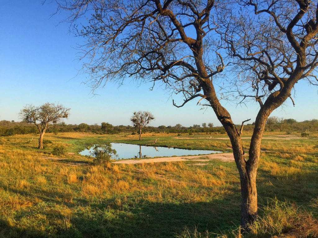 Savannah water hole, Wolhuter Wilderness Trail, Kruger National Park, South Africa