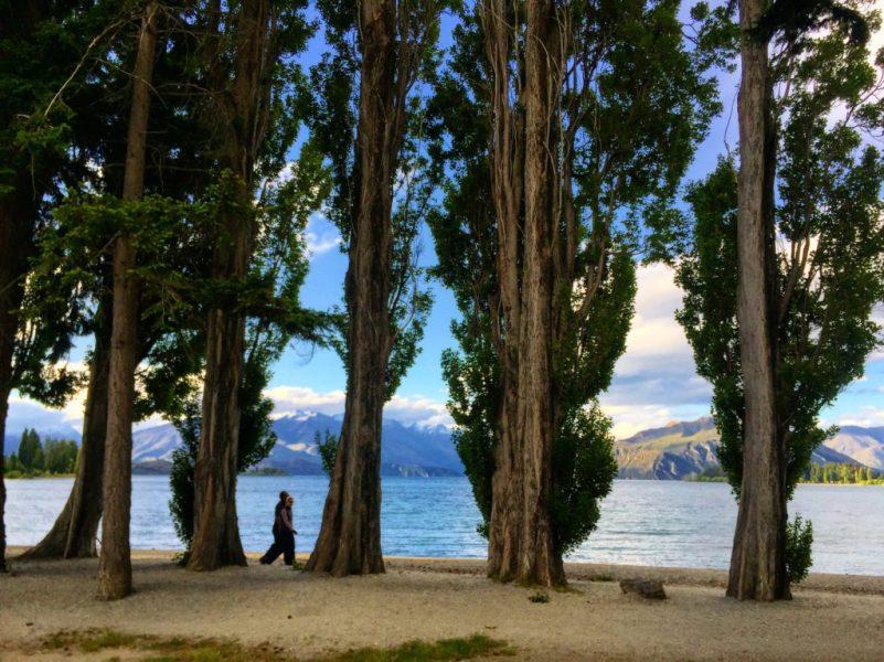 Evergreen trees, Lake Wanaka, Otago, New Zealand