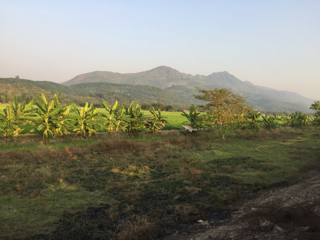 Countryside views of green fields and palm trees with mountains in the background