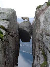 Sheep on rock