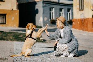 girl, dog, pet-5623231.jpg