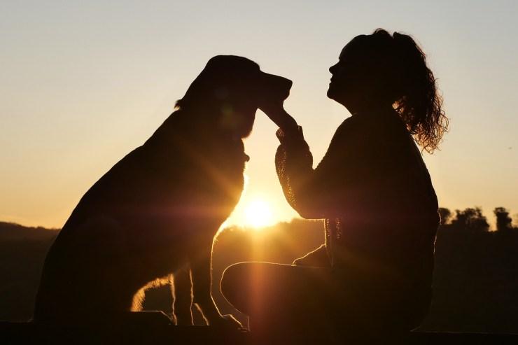 dog, animal, pet-4494554.jpg
