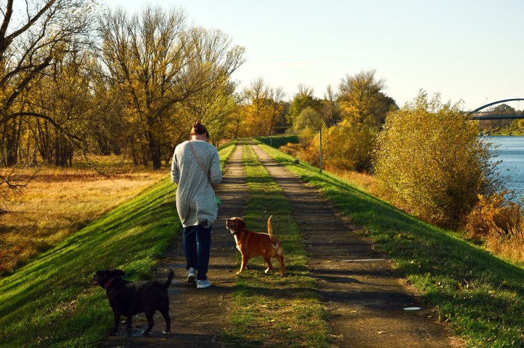 walk, human, person-3784045.jpg