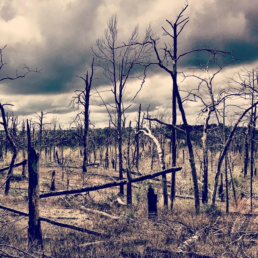 Hike: Bastrop, TX – Bastrop State Park