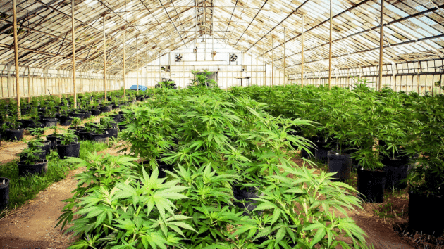 Anticipating Statewide Marijuana Legalization, Weehawken Amends Local Zoning Laws