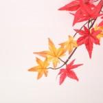 ラルマナイ自然公園で紅葉!北海道恵庭市の名所の1つ!