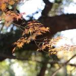 西岡公園で紅葉狩り2014!他にはない魅力とは?札幌近郊!