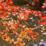 亀山オータムフェスティバル2014で紅葉満喫!楽しみ方色々!
