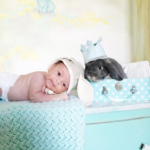 we-just-adopted-our-son-2-weeks-ago-and-i-couldnt-resist-photographing-him-with-our-bunny-7__700