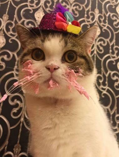 cat-eats-cake-5