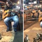 マレーシアのストリートミュージシャン〜誰一人として足を止める人はいないけど…子猫のハートはガッツリつかんだ!?