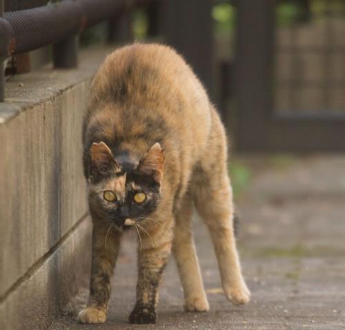 tokyo-stray-cat-photography-busanyan-masayuki-oki-japan-a42-57616a69b21d8__700