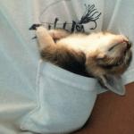 こんなところでも!?猫ってホントにどこでも眠れてしまうのだ!