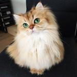 愛猫家にはたまらない!世界で最も美しい猫たち