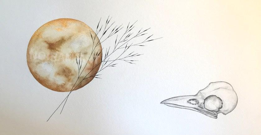Aquarelle sous le portique sélénique un instant s'éternise crâne corneille mlam noiram marion-lorraine poncet planète plante