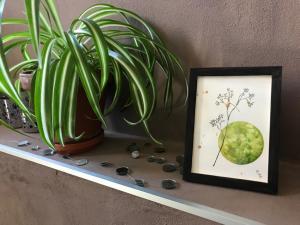 Aquarelle sylphide vert planète plante mlam noiram marion-lorraine poncet