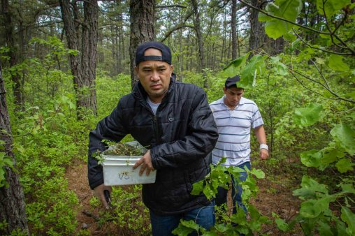 Foraging for Knife Fight (11 of 25)