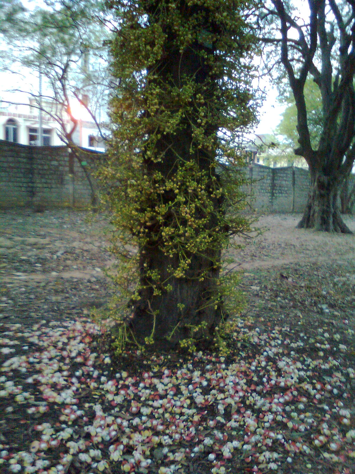 Sacred blossoms