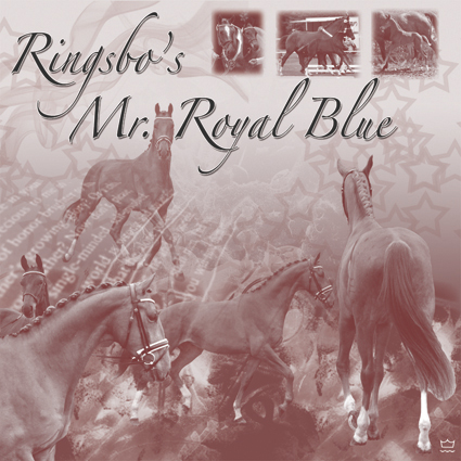 Ringsbo's Mr. Royal Blue