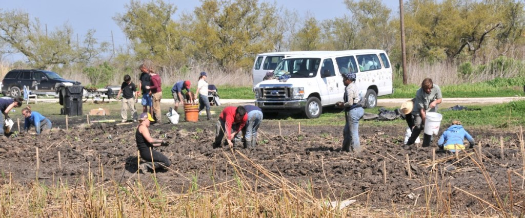 cropped-planting-Carols-Garden-Buras-03-25-10h.jpg