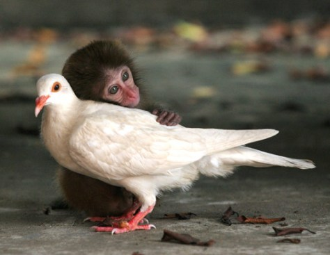 Unconditional love monkey and bird