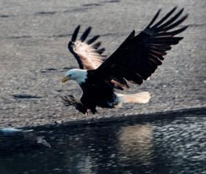 The Eagle Landing