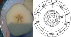 Path of Venus and the apple
