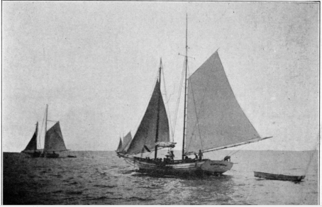 Dredging for oysters, Cabbage Reef, 1914