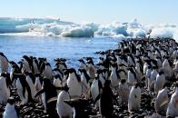 antarctica5
