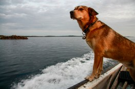 Murphy the seafarer