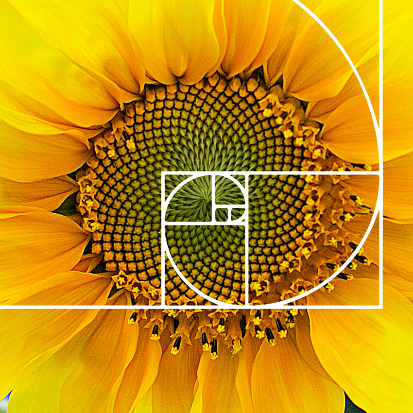 medida áurea - golden ratio