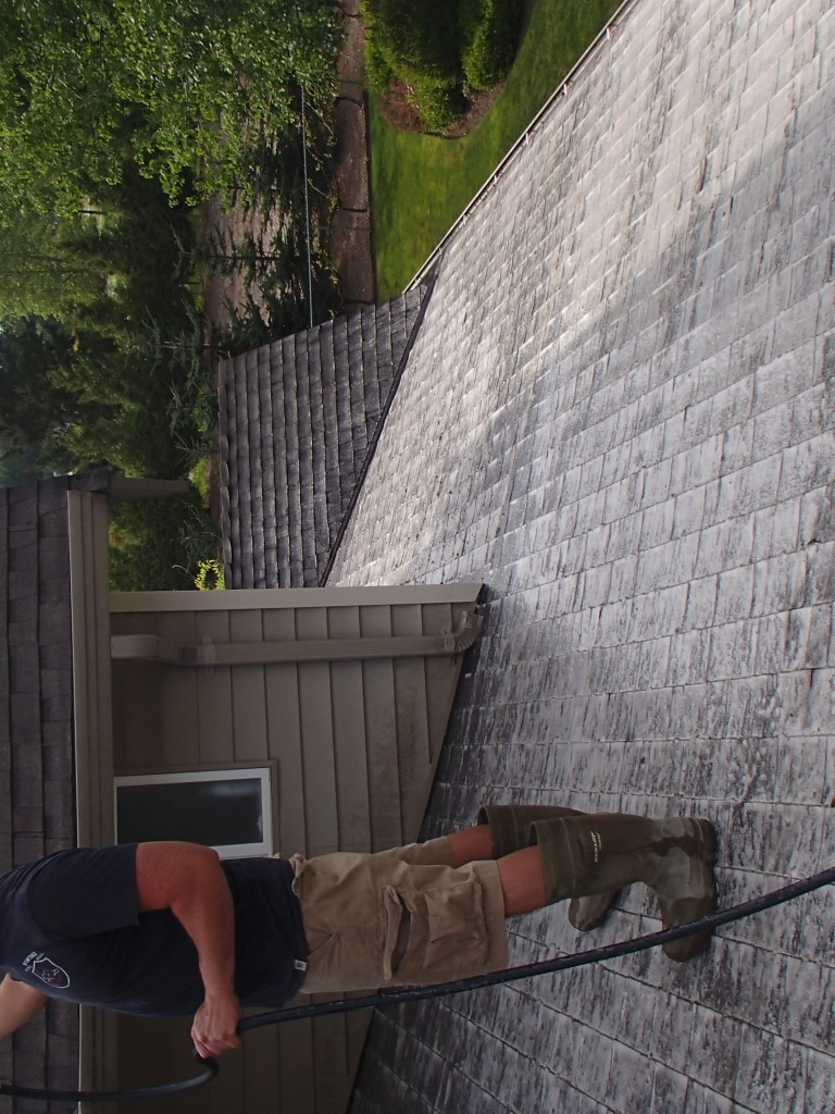 roof moss removal spray