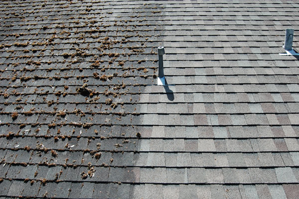 roof cleaning and moss removal Vernon