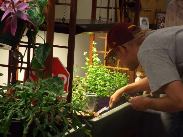 Brandon helping transplant  spearmint for Intrepid. A man's work is never done.