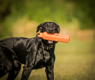 NO_LIMITS_KENNELS_2017_7_27 (128 of 215)