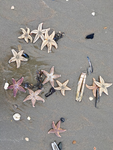 A picture of starfish washed up on the beach just like the lost, separated from the life giving Water of Jesus.