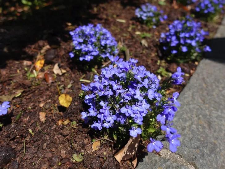 ハーブ園にあった花