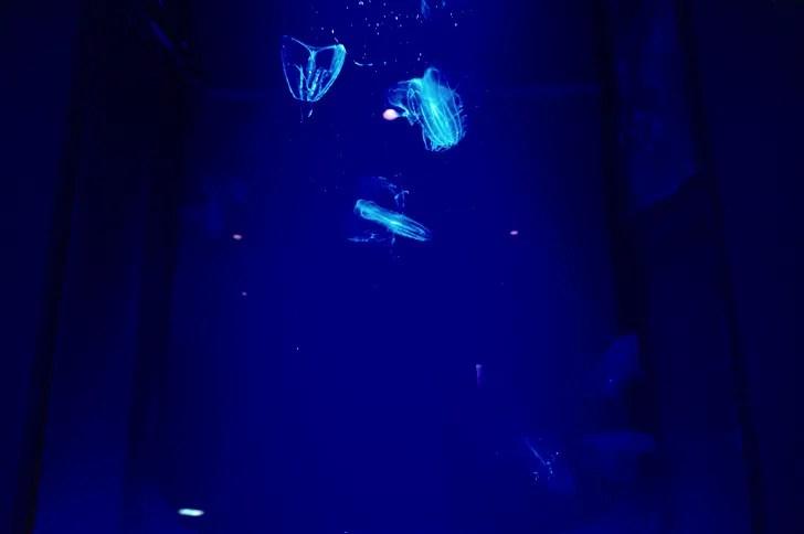 美ら海水族館のクラゲ