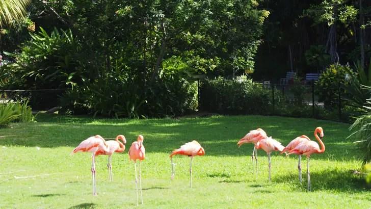 ハワイ・オアフ島にあるホノルル動物園(フラミンゴ)
