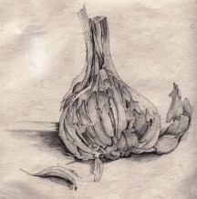 Still life, pencil sketch