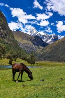 Horses at the Santa Cruz trek in Peru