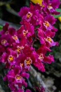 Orchids at Quito Botanical Garden in Ecuador