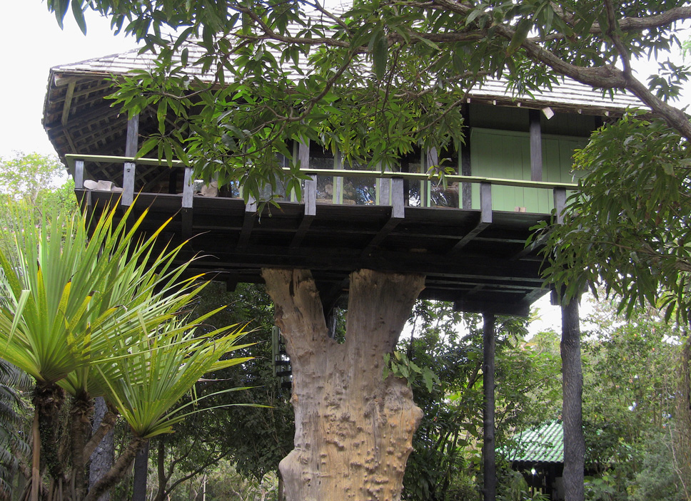 treehouse7