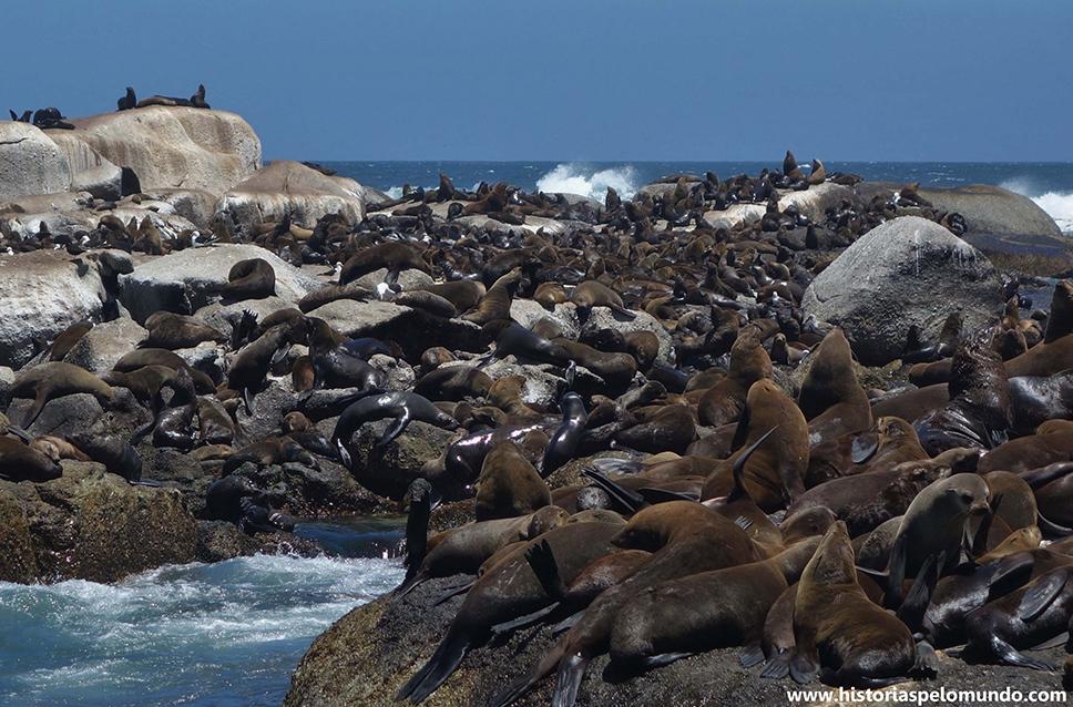 03 Uma ilha de leões marinhos em Hout Bay